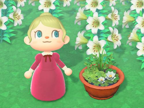 あつまれどうぶつの森 あつ森 ビオトープ ブラウン 茶色 家具 庭 花