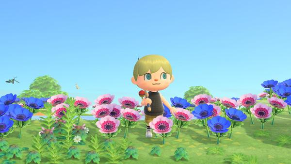 あつまれどうぶつの森 あつ森 交配限定の花が咲く島 アネモネ