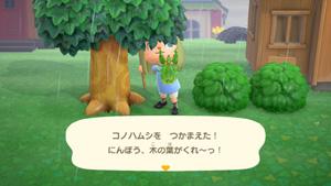 あつまれどうぶつの森 あつ森 コノハムシ