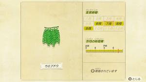 あつまれどうぶつの森 あつ森 ウミブドウ